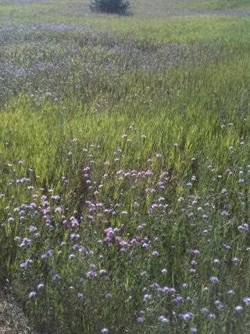 7238 Rolling Meadow Trail,  Harbor Springs, MI 49740 by Keystone Real Estate $30,900