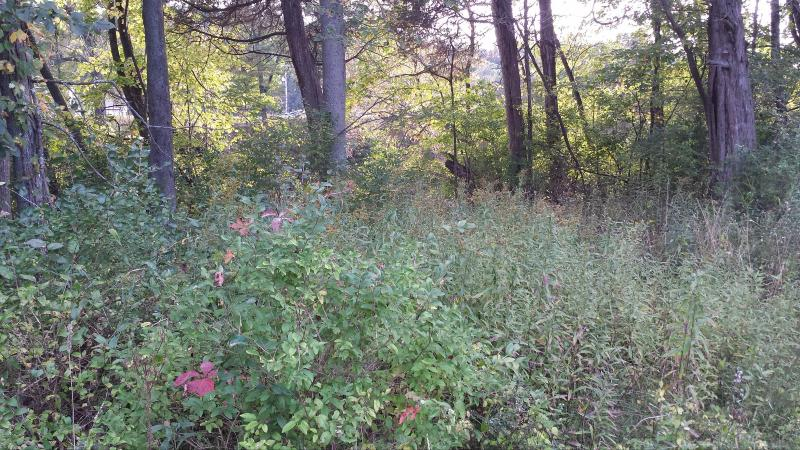 Parcel A Zoet Drive,  Middleville, MI 49333 by Greenridge Realty (cascade) $82,900