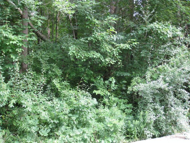 A 65th Street,  Fennville, MI 49408 by Mill Pond Realty $45,000