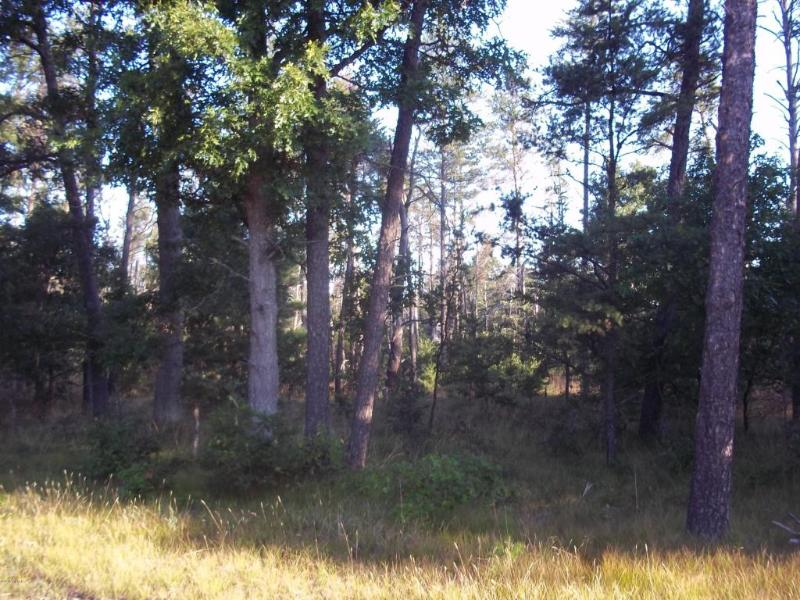 Forman Rd.,  Irons, MI 49644 by Big River Properties $20,900