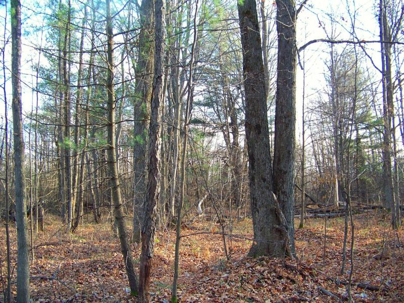 Old Stump Road,  Gaylord, MI 49735 by Koske Realty $139,900