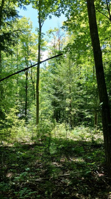16350 Pleasant Valley Road,  Atlanta, MI 49709 by United Country Great Lakes Realty & Auction $24,000
