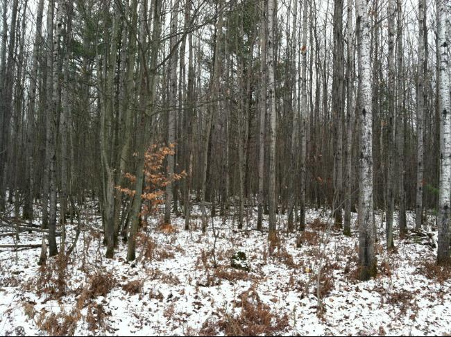 Forest Hills Drive,  Spruce, MI 48762 by Re/Max New Horizons $19,900