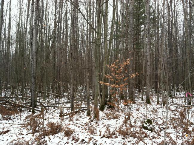 Forest Hills Drive,  Spruce, MI 48762 by Re/Max New Horizons $18,400