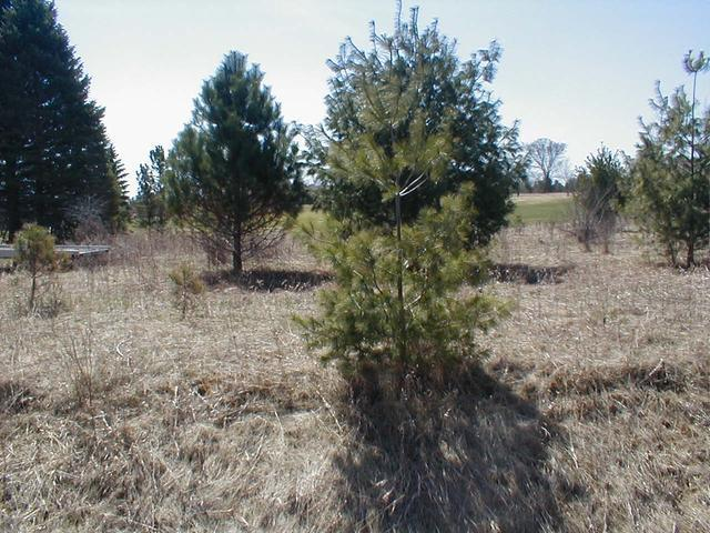 Listing Photo for 531 Lot SHAFTSBURY COURT